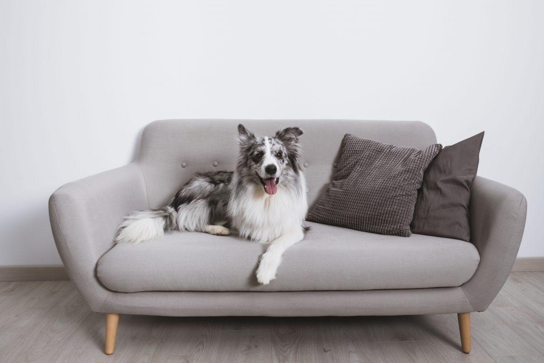 Mitől kutyabarát egy otthon?